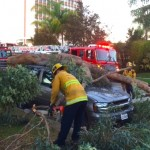 Large Limb Falls on Lucerne Boulevard – Smashes Parked Automobile