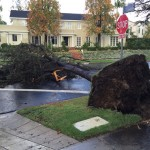 Storm Watch: Tree Downed, Skies Active