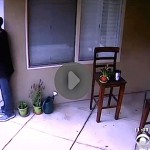 Attempted Burglary on Mansfield Caught on Camera