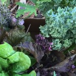 The Cool (Season) Crowd: Finding Your Garden Niche and What to Plant this Weekend